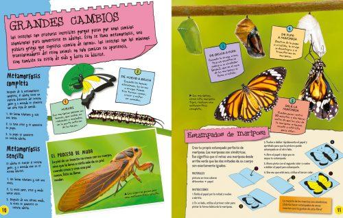 Interior Insectos